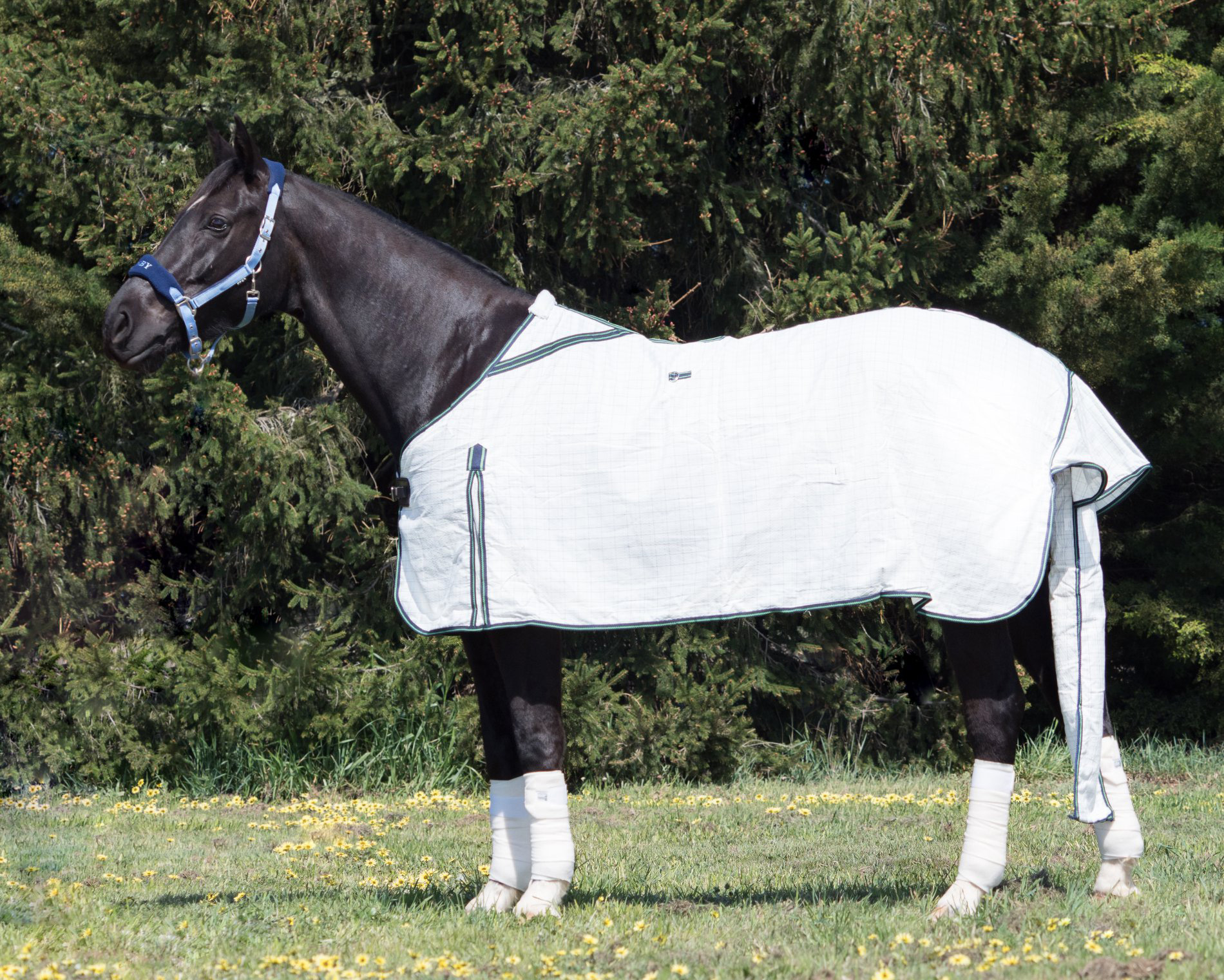 Derby Diamond Light Rug Green