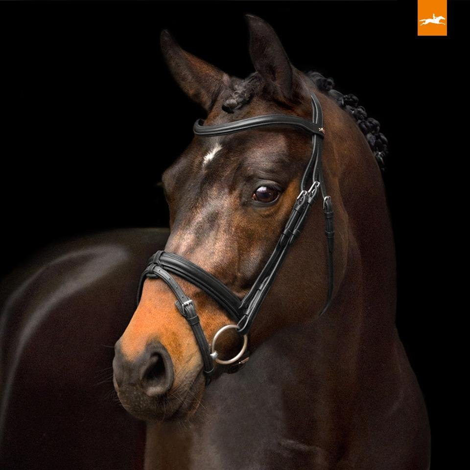 Schockemohle Tokyo Select Anatomical Bridle