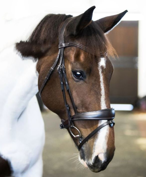 Lumiere Mikayla Convertible Bridle with Nappa Reins Brown